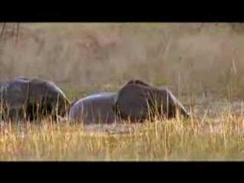 Video đàn voi nô đùa dưới nước