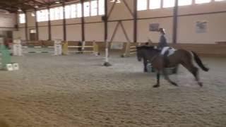 Лошадь любит прыгать! И всадник не нужен!