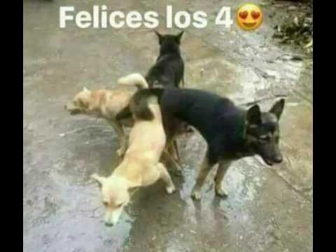 Sexo mexicano de a perrito - 1 5