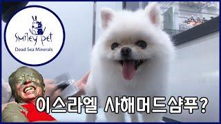 (심쿵주의) 강아지 사해머드 샴푸 '스마일리 펫…