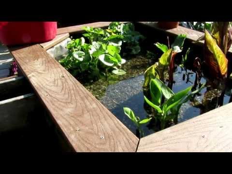 Pond Bog Filtration