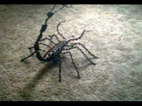 copper scorpion wire sculpture