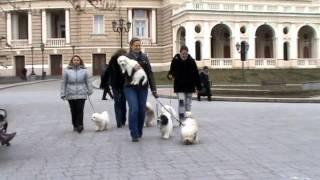 Архитектурные и живые достопримечательности Одессы(Приятно прогуляться по Одессе в любое время года, особенно когда рядом верные друзья ОДИСы - порода собак,в..., 2013-04-10T15:05:05.000Z)