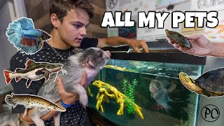ALL MY FISH & TURTLES!!! (backyard tour)