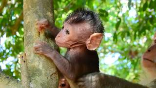Little newborn baby monkey play on tree with friends, Very well new born baby monkeys