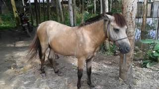 BD Sexy Horse