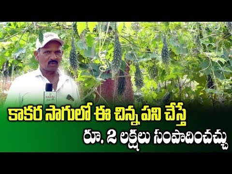 How To Earn Profits In Bitter Gourd Cultivation | High Profit Farming | Pendal System |SumanTV Rythu