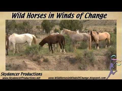 Saving America's Wild Horses,