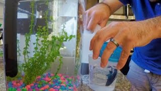 How to Clean Algae in a Fish Tank