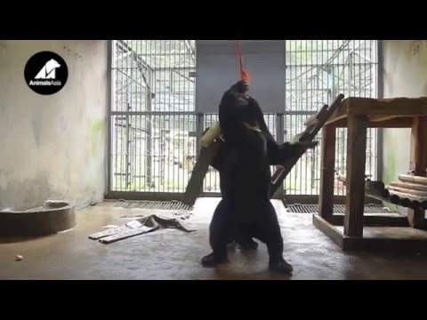 Baby sun bear cubs meet for the first time | Animals Asia