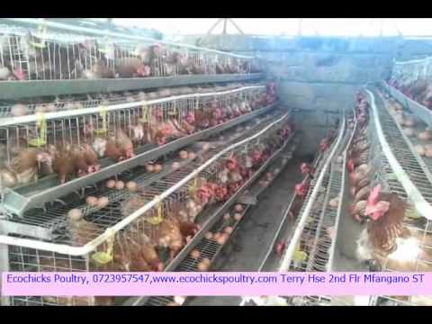 Chicken Cages In Kenya Ecochicks Poultry Ltd 0727087285