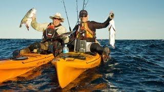 Shark Attack - Shark Rips Fish from Kayaker's Hand