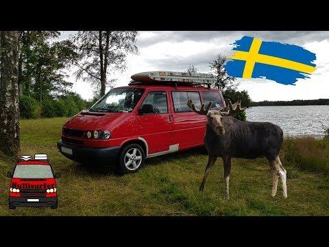 Elche in Schweden - Roadtrip durch Norwegen & Schweden im Bulli