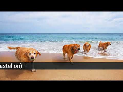 The Best Canine Beaches In Spain