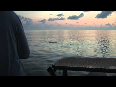 Florida Keys, Chasing Tarpon