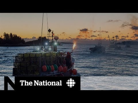 Million-dollar Fight In Canada's Richest Lobster Fishing Area