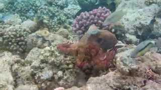 ABU DABAB BAY La barriera corallina - RED SEA Coral reef - HD