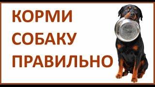 Питание собаки. Чем кормить собаку / щенка. Натуральный рацион.
