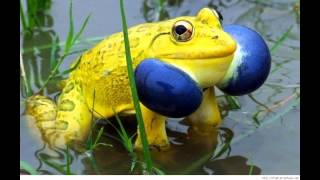 Funny Crazy Frog Videos  | Funny Frog Videos  Compilation