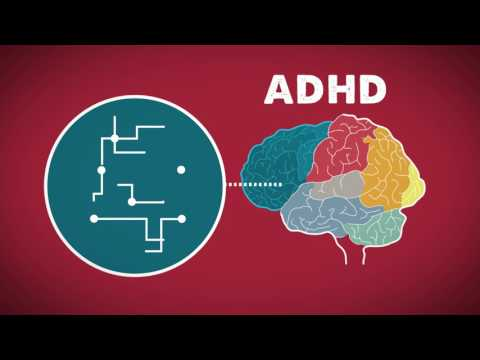 The Brain on ADHD
