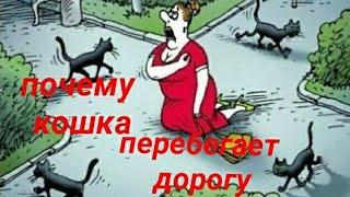 о кошке - кошка перебежала дорогу .. / простое объяснение старой приметы / все о кошках и котах