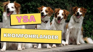 All Dogs Breeds - Kromfohrlander Dog Breed Information And Personality