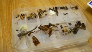 Моя колекцыя насекомых