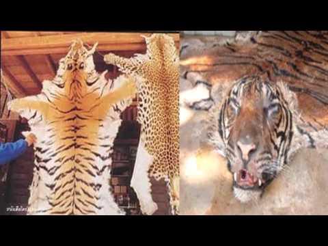 ป5 สังคม ครูกุลธิดา การอนุรักษ์ทรัพยากรธรรมชาติ