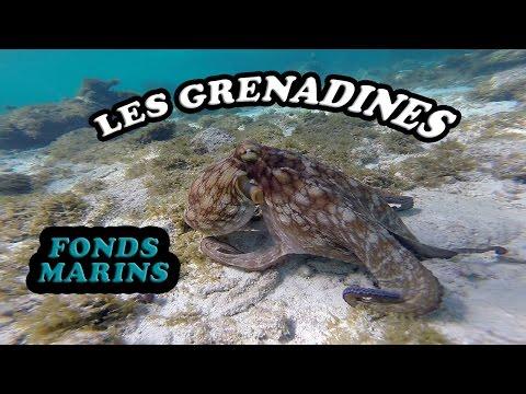 LES GRENADINES : Fonds marins