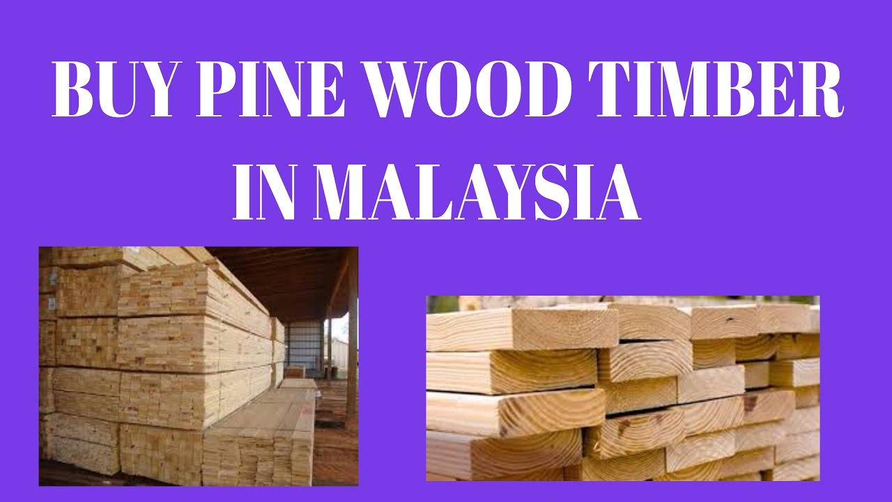 Pine Wood Timber In Malaysia Pilihan Alam Supplier