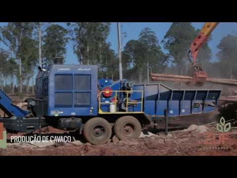 ZUF - Produção de Cavaco de Eucalipto - 01