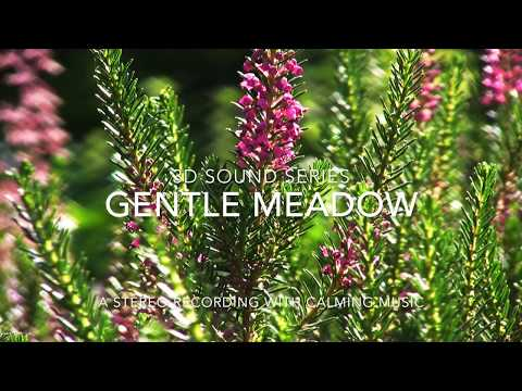 3D Sound Series - Relaxing Nature Sounds of a Gentle Meadow with Meditation Music