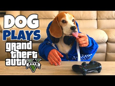 FUNNY DOG PLAYING VIDEOGAMES :  GTA 5 AND BATTLEFIELD 1
