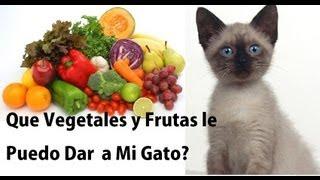 Que  Vegetales y Frutas Le Puedo Dar a Mi Gato y Cuales NO!! - SiamCatChannel