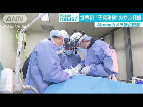 世界初 「子宮移植」でサル妊娠 実験に独占密着(18/08/09)