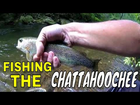 FISHING THE CHATTACHOOCHEE FOR TROUT IN NORTH GEORGIA