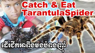Eating spiders ដើរជីកអាពីងមកបំពង​ Catch and cook: Fried Tarantulas