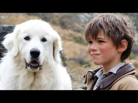 Порода собаки в фильме 'Белль и Себастьян' - Видео онлайн