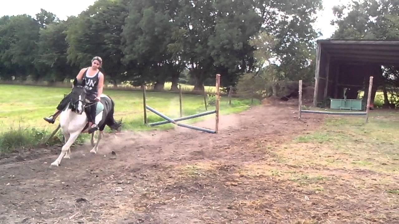 Cheval qui saute youtube - Frison qui saute ...