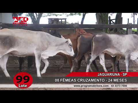 LOTE 099