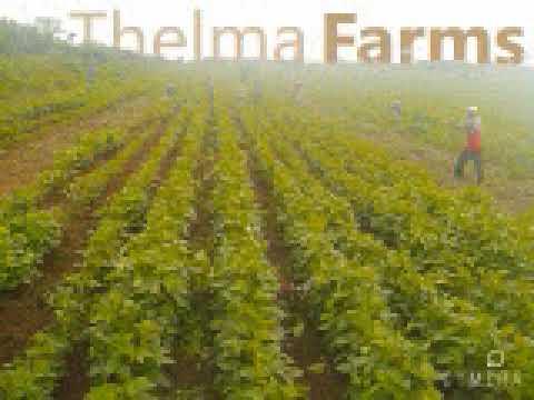 Thelma Farms InspirationFM Fidelity SME Forum