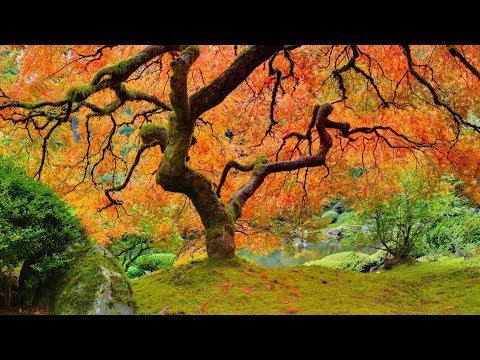 Entspannungsmusik Zen-Garten - Asiatische Einfluss Musikinstrumente - Meditationsmusik