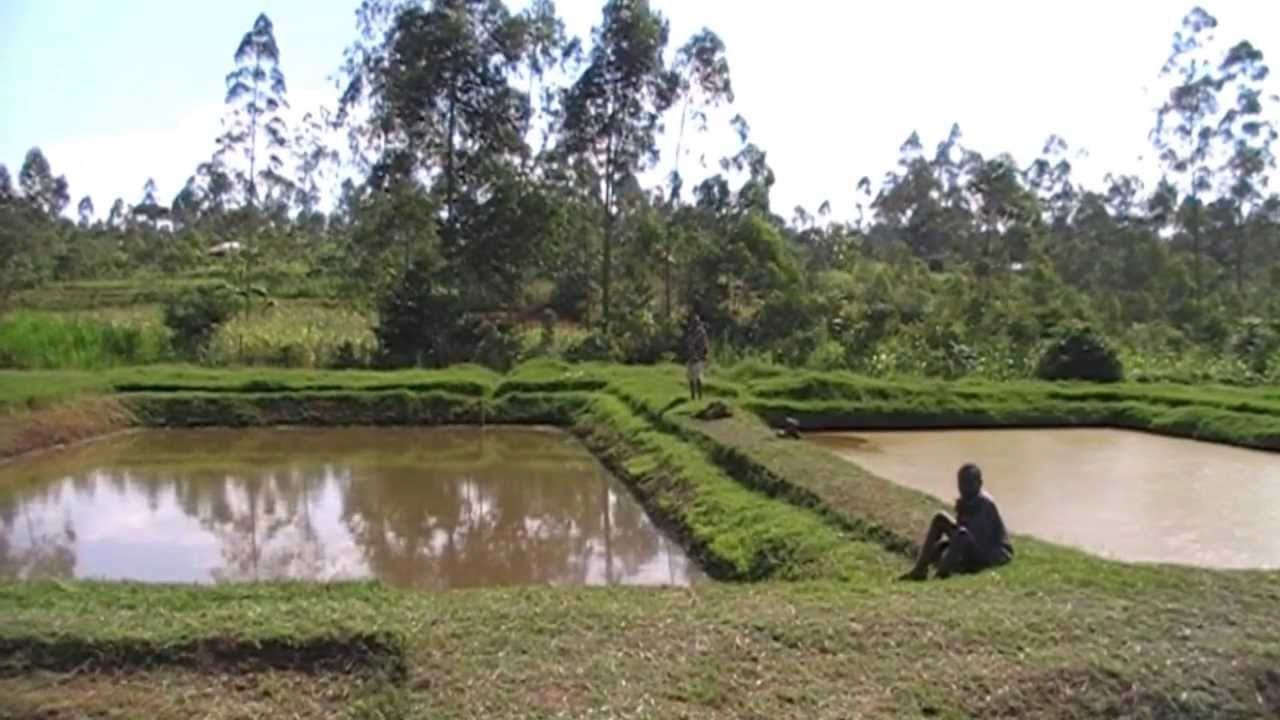 Tilapia Fish Pond Design