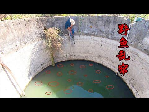 10米深的超大灌溉井,井底存活一堆野生大货,阿彬扒在井边抓爽了