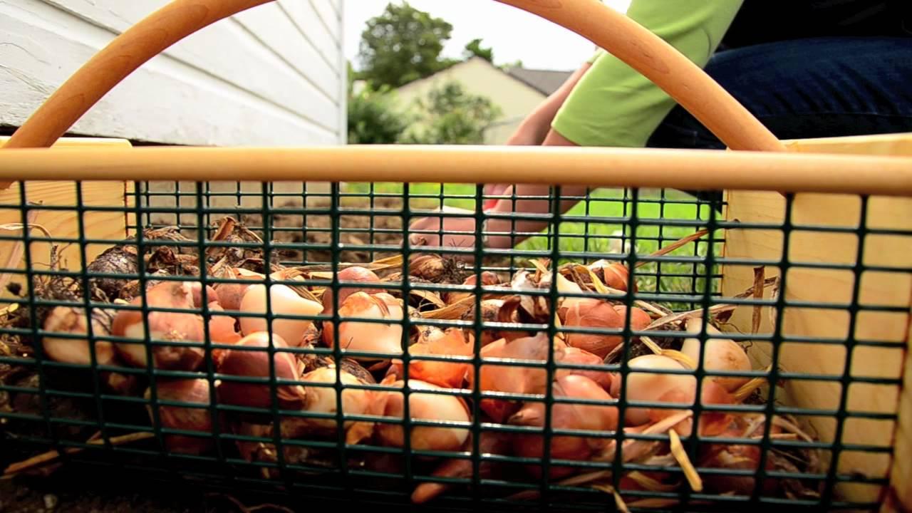 GardenersEdgecom and the MGH Garden Hod Basket YouTube