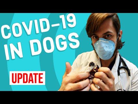 Coronavirus In Dogs | Vet Explains UPDATE