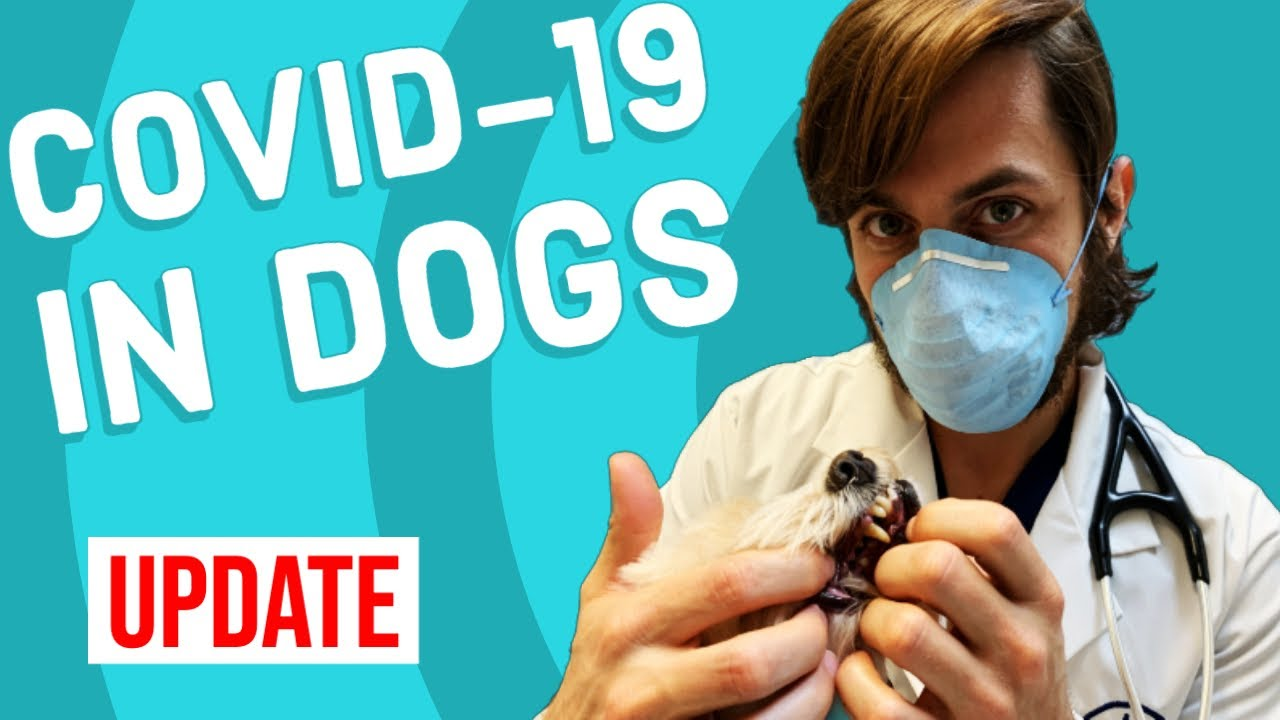 Important Information about the Coronavirus / COVID-19 and pets