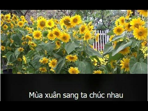 Phim ca nhạc karaoke Chúc Tết