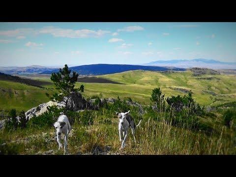 Italian Greyhounds go Camping * DAY 4 * Mountain Top