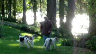 Jeff And Pups Go Down To Lake